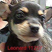 Adopt A Pet :: Leonard - Alexandria, VA