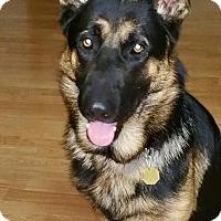 Adopt A Pet :: Seth - Alameda, CA