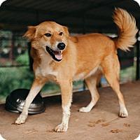 Adopt A Pet :: Willow - Denver, CO