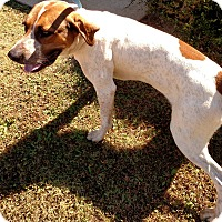 Adopt A Pet :: 52616 Time Up - Franklin, GA