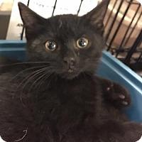 Adopt A Pet :: Alexander - Boynton Beach, FL