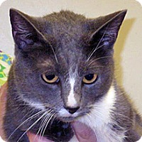 Adopt A Pet :: 324015 - Wildomar, CA