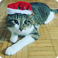 Adopt A Pet :: Tulo - THORNHILL, ON