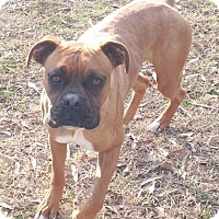 Adopt A Pet :: Loki - E. Greenwhich, RI