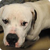 Adopt A Pet :: Jude - Ridgeland, SC