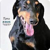 Adopt A Pet :: Tiana - Queenstown, MD