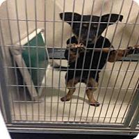 Adopt A Pet :: A1048694 - Bakersfield, CA