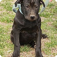 Adopt A Pet :: Luke $300 adoption fee - Ocala, FL