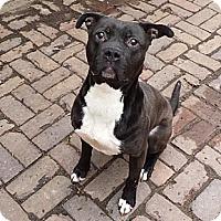 Adopt A Pet :: YAGO - Chicagoland area, IL