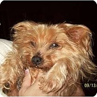Adopt A Pet :: Laddie - Statewide and National, TX