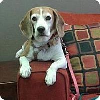 Adopt A Pet :: Gloria - Phoenix, AZ