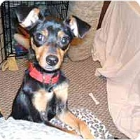 Adopt A Pet :: Adopted by Cindy w/AMPSClarise - Swiftwater, PA