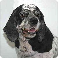 Adopt A Pet :: Flower - Port Washington, NY
