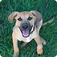 Adopt A Pet :: DOT - Torrance, CA
