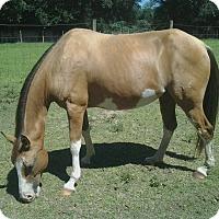 Adopt A Pet :: Bootsy - Cantonment, FL