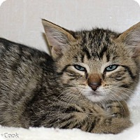 Adopt A Pet :: Kitty Kelly - Ann Arbor, MI