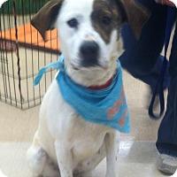 Adopt A Pet :: Baby - Lincolnton, NC