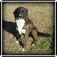 Adopt A Pet :: Jake - Indian Trail, NC