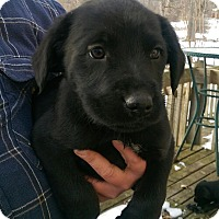 Adopt A Pet :: Manning - ADOPTED!! - Antioch, IL