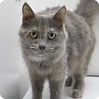 Adopt A Pet :: Genesis - Merrifield, VA