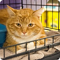Adopt A Pet :: Thomas $75 - Seneca, SC