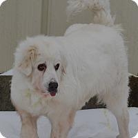 Adopt A Pet :: Trina - Pacific, MO