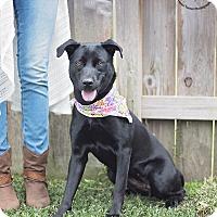 Adopt A Pet :: Bella Raisin - Kingwood, TX