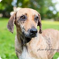 Adopt A Pet :: Annie - Pittsburgh, PA
