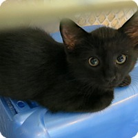 Adopt A Pet :: Pogo - Geneseo, IL