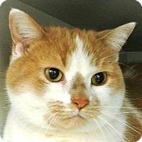 Adopt A Pet :: Dexter - Kalamazoo, MI