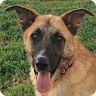 Adopt A Pet :: Sander