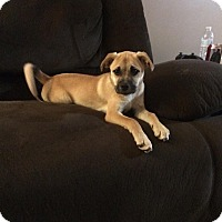 Adopt A Pet :: Nala - Enid, OK