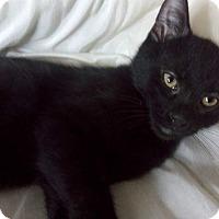 Adopt A Pet :: Kuro - Columbus, OH