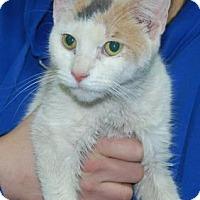 Adopt A Pet :: Wyoming - Brooklyn, NY