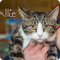 Adopt A Pet :: Allie - Somerset, PA