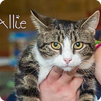 Adopt A Pet :: Allie - Somerset, PA