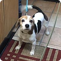 Adopt A Pet :: Lexi - Voorhees, NJ
