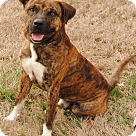 Adopt A Pet :: Samson