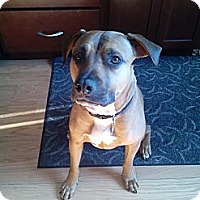 Adopt A Pet :: Buddy - Vernon Hills, IL