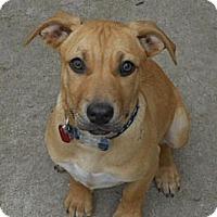 Adopt A Pet :: KIANA - Torrance, CA