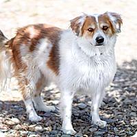 Adopt A Pet :: Elliot - Phoenix, AZ