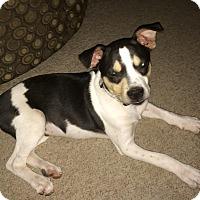 Adopt A Pet :: Leonard - Phoenix, AZ