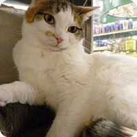 Adopt A Pet :: Dottie - Capshaw, AL