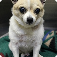 Adopt A Pet :: Tiny BLIND *urgent* - Los Angeles, CA