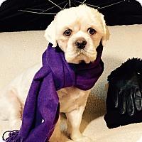 Adopt A Pet :: Parker - Irvine, CA