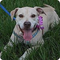 Adopt A Pet :: Mona - Tampa, FL