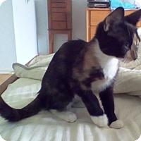 Adopt A Pet :: Mocha - Kirkwood, DE