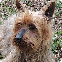 Adopt A Pet :: Carlo - Joplin, MO