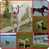 Adopt A Pet :: Oliver - Davenport, FL
