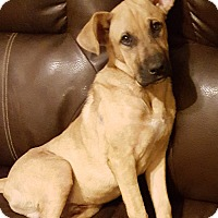 Adopt A Pet :: Bear - Huntsville, TN